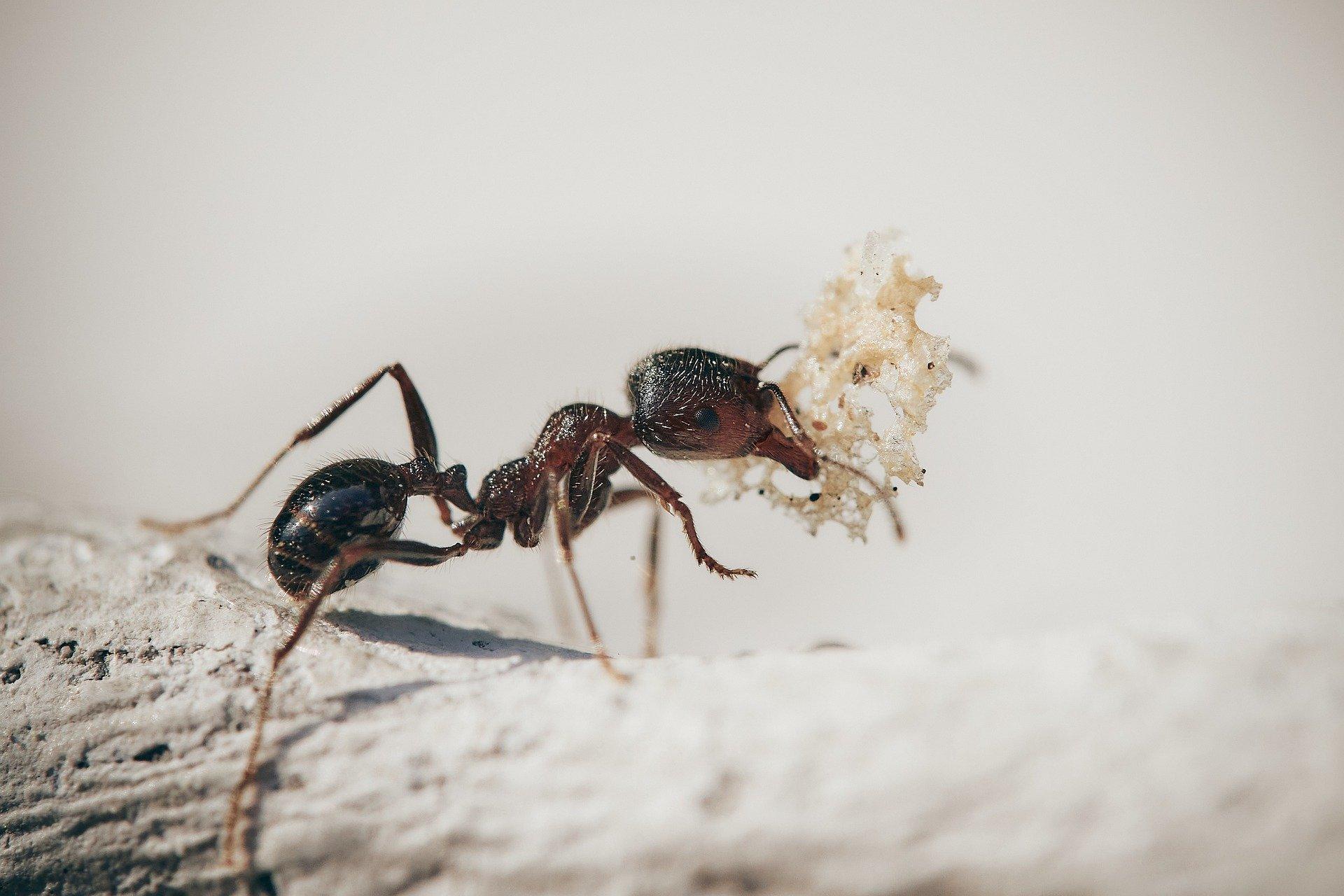A hangyák titokzatos élete